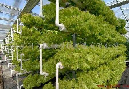 空间 菜园/阳台菜园|阳台种菜设备|家庭菜园|无土栽培研发成功