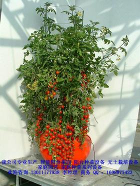 阳台/阳台菜园|阳台种菜设备|家庭菜园|无土栽培研发成功