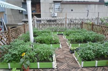 加盟哈哈农场,加盟阳台种菜,加盟阳台菜园图片