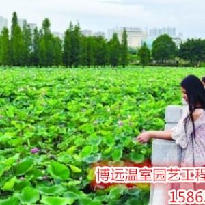 新型生态旅游业 现代农业  观光休闲农业