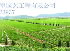 新型生态农业  生态观光农业  节假日生态旅游