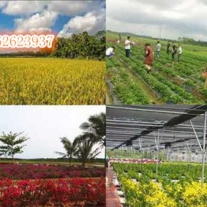 乡村生态旅游  新型生态农业模式烟台  新型生态农业旅游规划