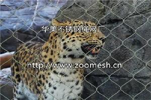豹子笼舍围网、金钱豹不锈钢隔离