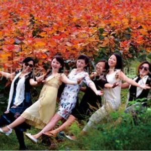 """美丽彩色树种""""红霞杨"""",打造安徽生态旅游彩叶景观"""