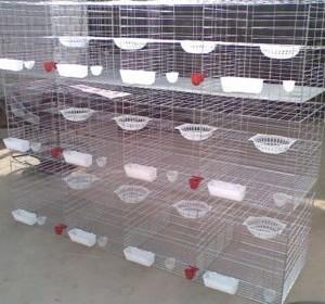 供应铁丝网组装鸽笼,白鸽笼三层组装,鸽子养殖笼具