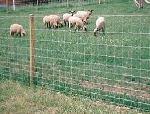 养鸡荷兰网铁丝网 养殖场围栏 大棚圈地围栏网