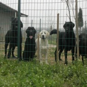 养殖铁丝网-养殖护栏网生产厂家