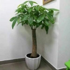 常州租赁零售绿植花卉盆栽服务周到