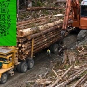 澳洲酸枝 红木家具澳洲酸枝木原木招商