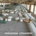 鸭塑料地板 养鸡专用漏粪地板 家禽养殖设备