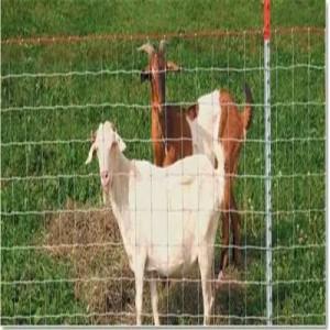 厂家直销镀锌网养殖网 牛羊铁丝网护栏网围栏栅栏