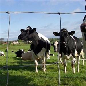 直销镀锌网养殖网 土地隔离网牛羊铁丝网护栏网围栏