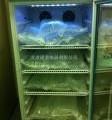 袋裝甘露醇結晶融化柜
