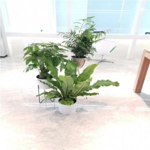 绿植销售 花卉租摆 绿植租赁 天津花卉出租 天津绿植养护