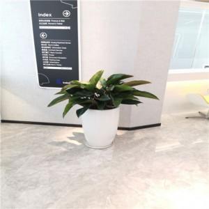 天津绿植租摆 花卉 天津花卉租赁丨绿植 天津谷鑫亚泰花卉公司
