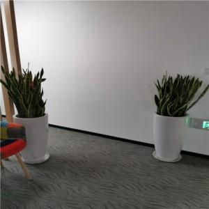 天津花卉租摆公司天津谷鑫亚泰花卉租赁天津花卉销售