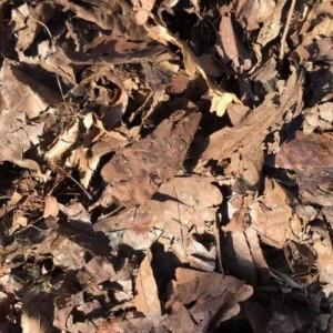 厂家大量***供应腐殖土橡树叶松枝土君子兰营养土花卉土可代工