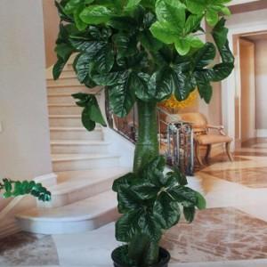 烟台绿植租售租摆 花卉出售 室内绿化设计 园林绿化等厂家直供