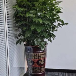 居于都市・融于自然-晨蜜园艺绿植花卉租售深圳办公室植物租摆开