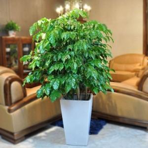 烟台室内绿植花卉租售租摆服务 五区订开业绿植