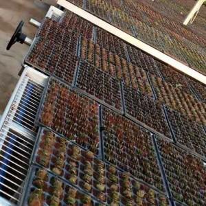 花果蔬菜温室大棚使用移动苗床