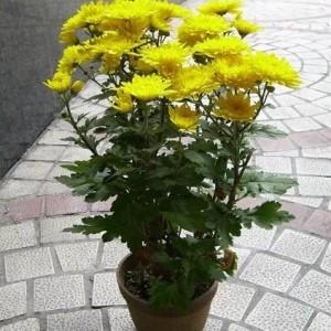天河区室内租花公司 广州植物花卉租摆 园林绿化管理
