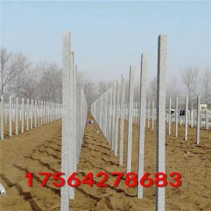 各尺寸可加工水泥立柱 蔬菜花卉连栋大棚水泥立柱