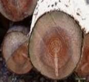 越南花梨原木进口报关公司