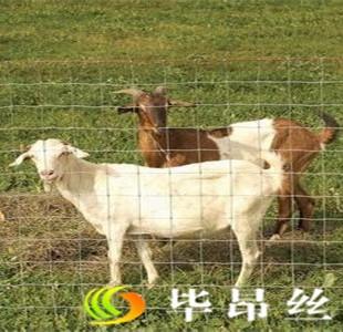 黑龙江大庆养殖围网、养殖围栏去哪儿买?毕昂!