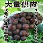 出售供应辽宁北镇巨峰葡萄