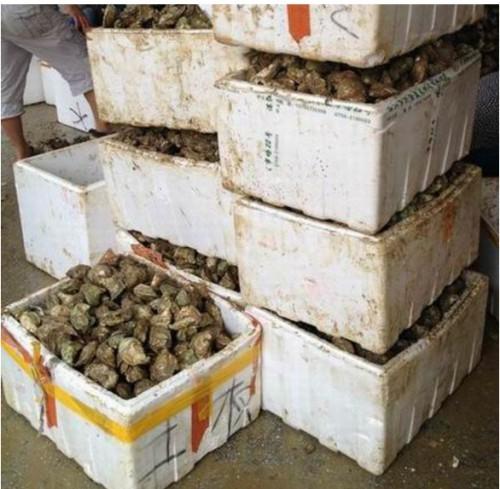生蚝的做法_湛江那里有好吃的生蚝