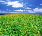 农业观光园旅游规划 休闲农业规划项目 生态乡村旅游乡旅供