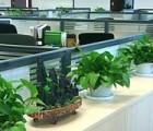 花卉绿植养护 绿植养护公司 花卉的养护管理 春婕供