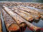 专门从事木材进口代理报关