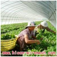 防虫网、农用防虫网、大棚防虫网、果蔬防虫网、聚乙烯防虫网、防虫网生产厂家