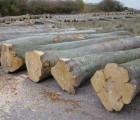 天津上海+青岛巴花木材进口报关代理、上海+青岛巴花木材进口商检代理、上海巴花木材进口清关代理