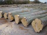东莞木材进口清关代理报关公司|商检的内容|需要资料