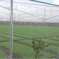 塑料防虫网报价