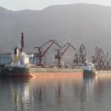 广州大果紫檀原木广州进口审价|市场价格|木材进口代理