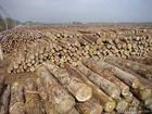 """东莞""""老挝木材进口代理""""""""老挝木材进口代理清关"""""""
