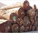 天津河北山东木材进口代理、木材进口报关、木材进口手续、原木进口代理