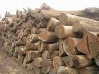 香港进口通关快|木材原木报关,木材原木报检、木材原木进口检疫