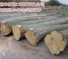 广州黄埔港木材进口报关行 原木 板材 木方 木材进口报关文件 黄埔港木材进口文件证件需要些