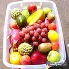 北京市橄榄油礼盒特级初榨橄榄油批发团购橄榄油