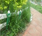 衡水PVC草坪护栏