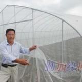 衡水防虫网