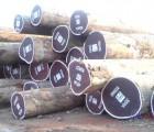 深圳西班牙冷杉进口商检代理|木材原木报关|深圳进口报关公司