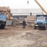东莞木材进口代理 家具进口清关 木皮进口清关 木方进口清关代理