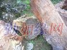 上海市非洲原木进口清关|刺猬紫檀原木代理清关|巴花木材进口清关代理
