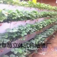 正定供应植物立体式种植槽13032671560